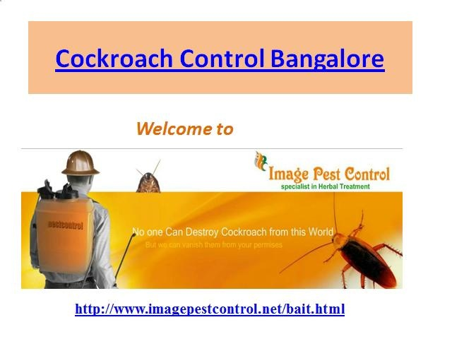 Cockroach Control Bangalore by Imagepest Control
