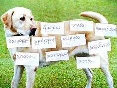 Dyslexia at home: Επίθετα σε εικόνες!! Λεξιλόγιο και Δυσλεξία