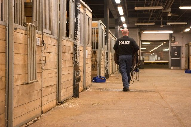 Where Do Police Horses Come From?  For the Toronto Police's mounted unit, finding the right horse is a finicky business. BY DANIEL SELLERS