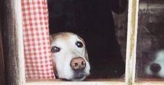 5 pautas para reducir la ansiedad por separación de tu perro