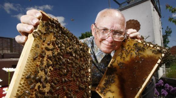 Bienenzucht : So gelingt auch Ihnen der Einstieg in die Imkerei - DIE WELT mobil