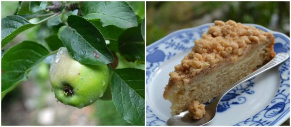 Apfelkuchen mit Zimtstreuseln <3 #vegan  fluffy apple crumb cake