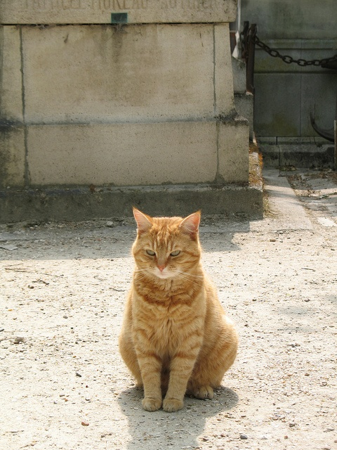Pere Lachaise cemetery -  there are 60 cats in Pere Lachaise cemetery. They are fed by people  living near by...