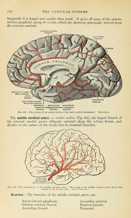 Grays human anatomy