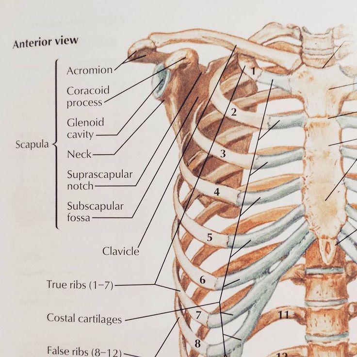 Ungewöhnlich Netter Atlas Der Menschlichen Anatomie 5. Ausgabe Pdf ...
