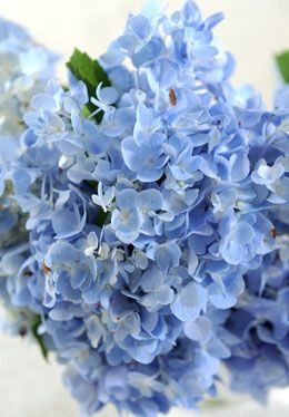 The Blessed It's Because It's Important To Have Blue Plants at Your Wedding… #Life_Style #engagement_card_message #funeral_card_messages