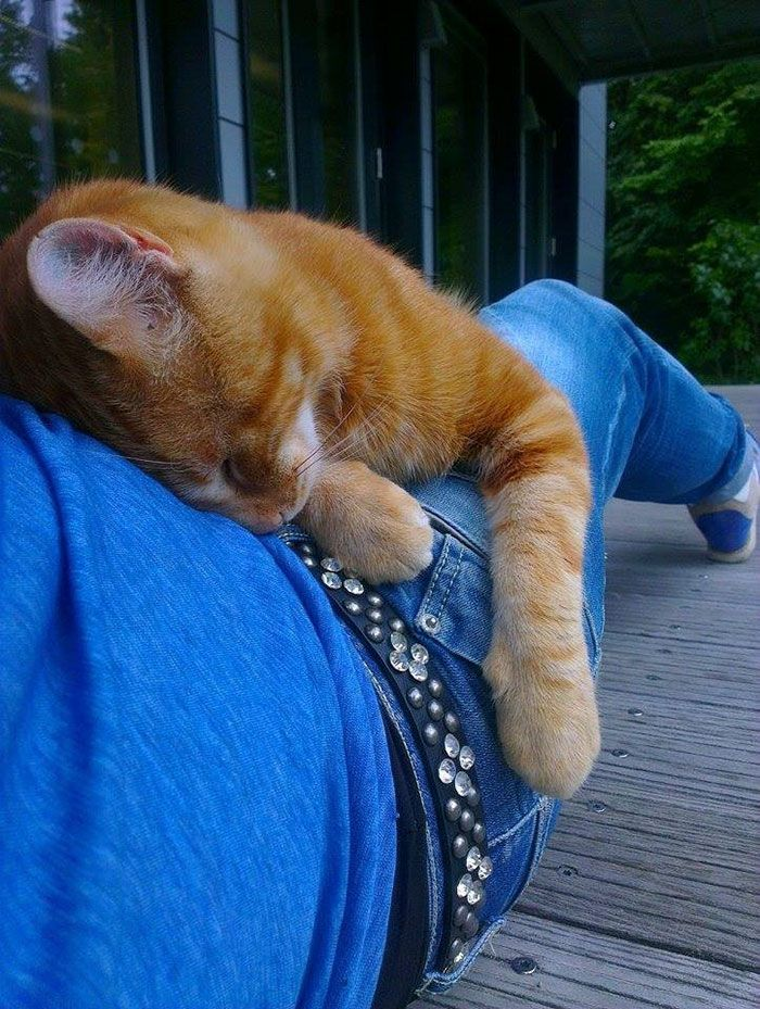 While therapy dogs are in the spotlight, this ginger kitty is bringing comfort to lucky university students without any training whatsoever. Known as the Campus cat, the feline comes to the University of Augsburg every day to help students relax by offering them cuddles.