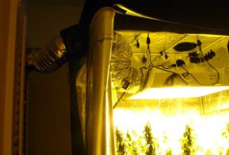 1000 Images About Cannabis Exhaust System On Pinterest
