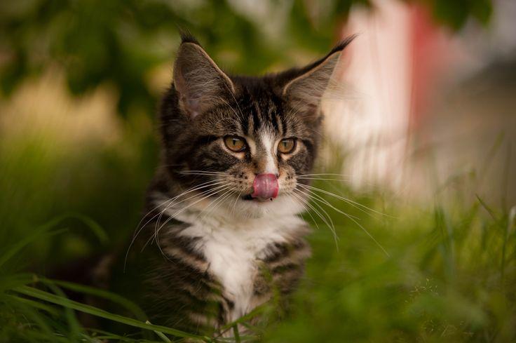 Wayne as kitten