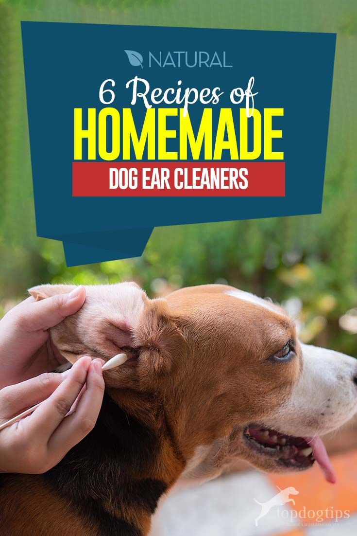 6 recipes of homemade dog ear cleaners in 2020 dog ear