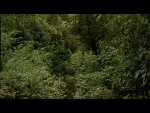 Great movie showing teh rainforest great graphics and evolution of the tropical rainforest