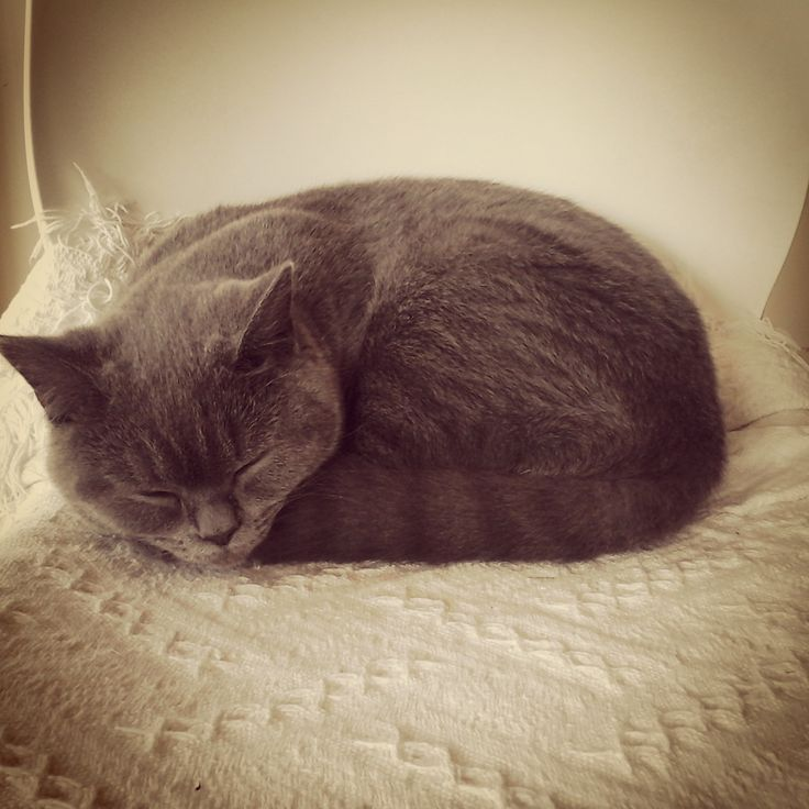 Sleep time after a busy morning of photo's for Monkee Tree Scalable Cat Ladders. www.monkeetree.com