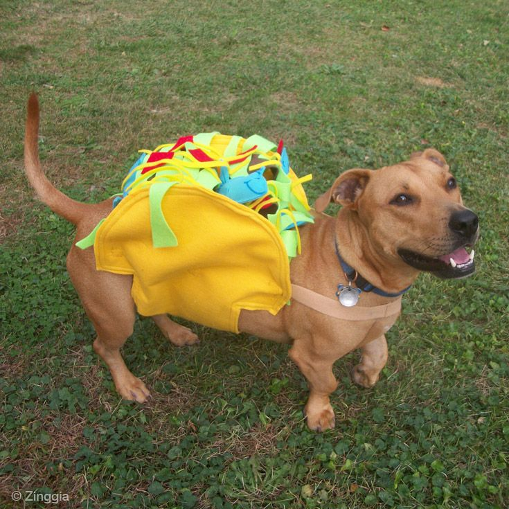 Tuna fish joe demanded to be a tuna fish taco for this for Is tuna fish good for dogs
