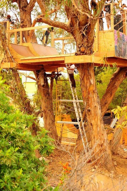 Skateboard ramp tree house. dangerous, and awesome all in one.