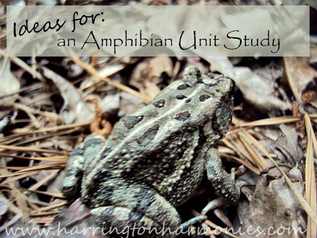 Amphibians Journal 40 best images about N...