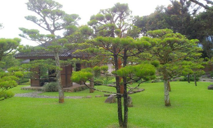 di taman Jepang