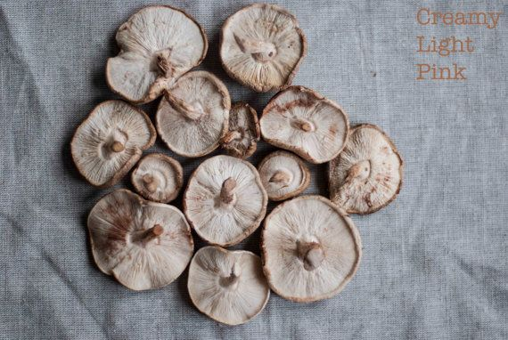 #shiitake #foodphotography; available in my #etsy store #CreamyLightPink  #kitchenart #wallart #homedecor