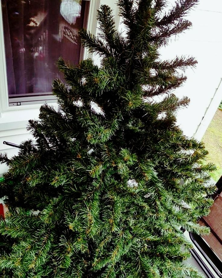 Hudson's Bay Christmas tree, bid today at $1 at the moment! Very organized for the festive season! https://auction.blackpearlemporium.ca/m/#/auction/32/item/nice-fir-christmas-tree-purchased-at-hudsons-bay-768 #collingwood #auctions #furniture #giftideas #christmastree #festiveseason #xmas #feelingfestive #onlineauction