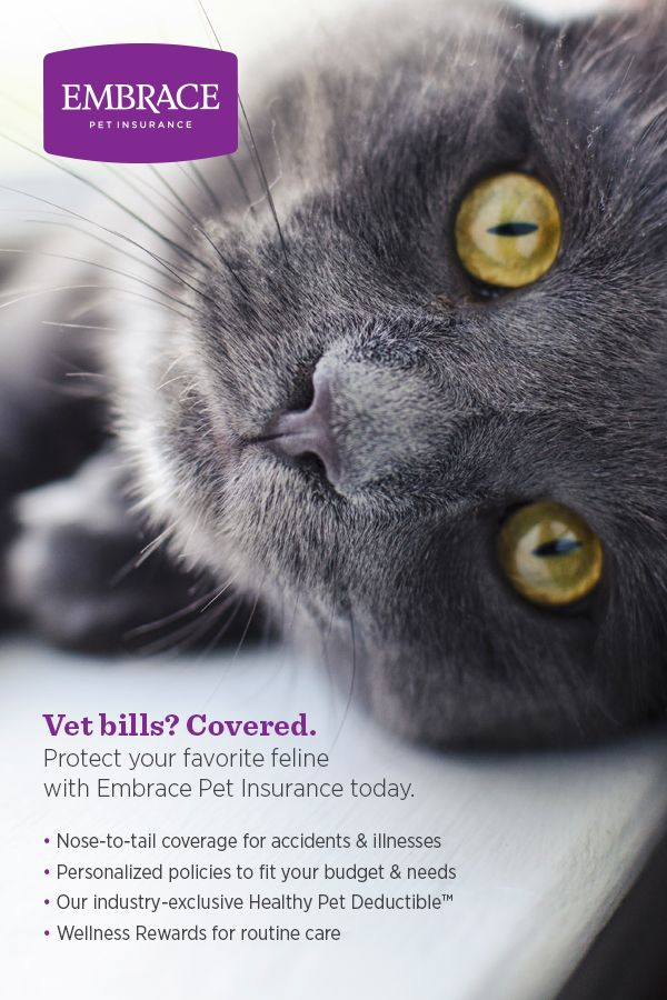 Never let expensive vet bills come between you and the best care for your favorite feline. Get a free quote & personalize the perfect policy for your pet today.