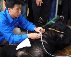 """Ban The Cruel Bear Bile Industry - The Petition Site. Please SIGN & SHARE Animals Asia's petition!! More than 10,000 bears are kept on bile farms in China, and around 2,400 suffer the same fate in Vietnam. The bears are """"milked"""" regularly for their bile, which is not only used in traditional medicine but also in many ordinary household products.   Click on photo for full petition. Thank YOU!   http://www.thepetitionsite.com/takeaction/701/365/795/"""