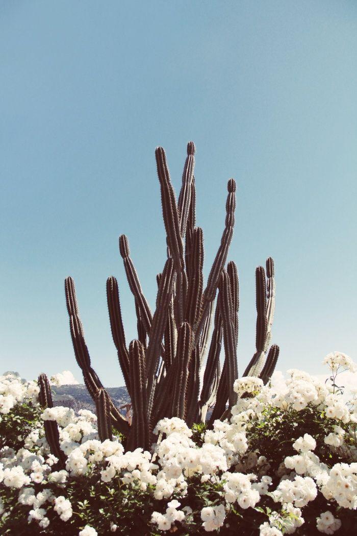 FLORAL CACTUS Art Print  https://society6.com/product/floral-cactus-fb1_print#s6-4834793p4a1v45