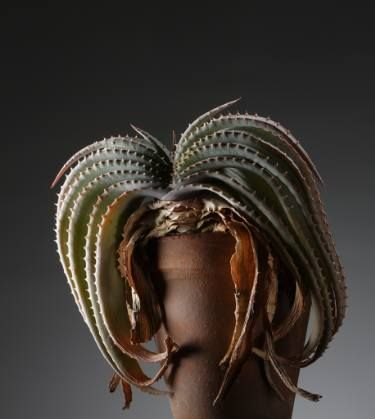 "Saatchi Art Artist Jac de Villiers; Photography, ""Aloe suprafoliata"" #art"