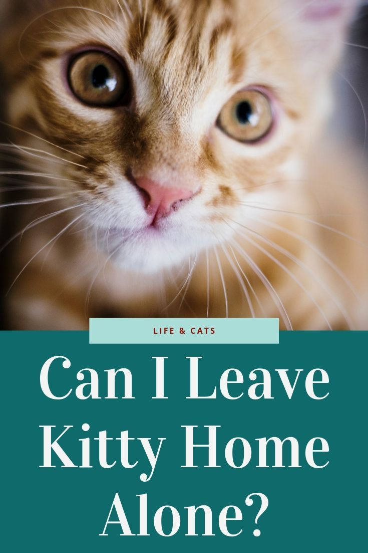 Can I Safely Leave My Cat Home Alone Pet Sitting Business Low