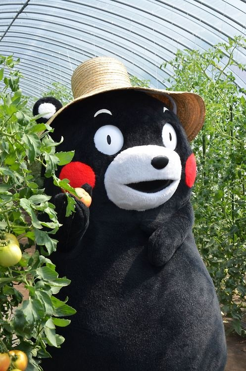 kumamon | Tumblr
