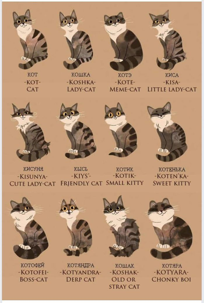 Russians Words For Cat Russian Cat Cats Russian Language