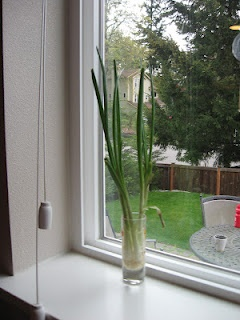 GROW GREEN ONIONS   in your windowsill, this only took 9 days!   If you buy green onions and use the tops, place the white bulb part of the onion in a small glass of water and put on a windowsill or sunny place     change the water every day: Regrow Green Onions, Windowsil, Stuff, Buy Green, Growth Amazing, Grew, Growing Green Onions, I'M, Bags