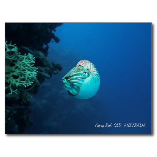 Many thanks to Joaquim from Bragança, Portugal for purchasing this Nautilus postcard