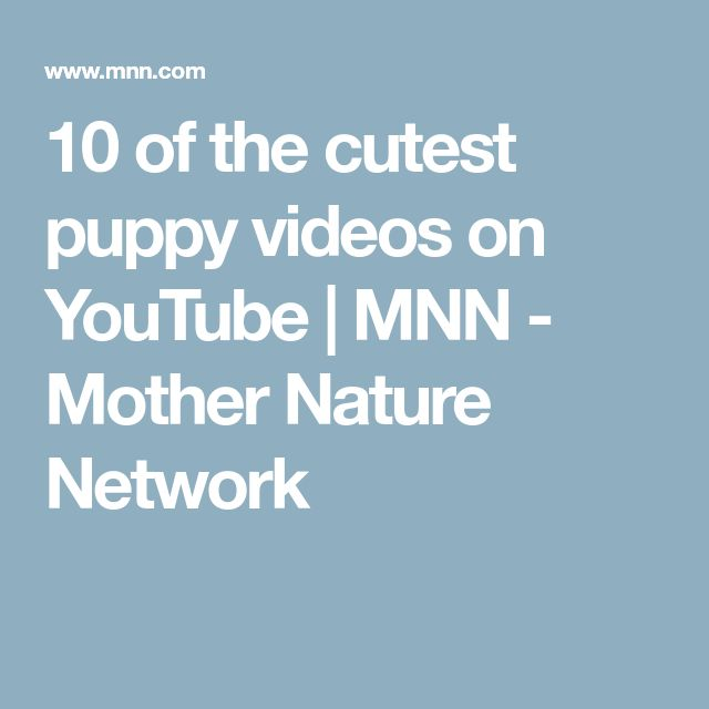 10 of the cutest puppy videos on YouTube | MNN - Mother Nature Network