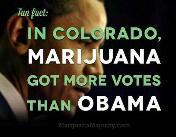 100 best images about Weed Facts. on Pinterest