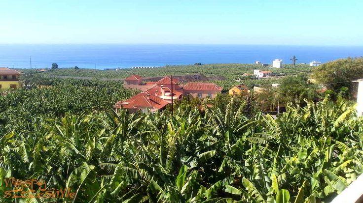 plantacje bananów w #Tazacorte na #LaPalma
