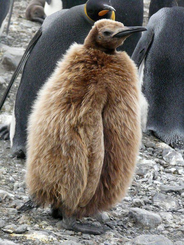 Image result for teenage penguins