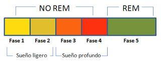 FASES DEL SUEÑO Cuando dormimos, recorremos una serie de fases durante todo nuestro descanso: la fase REM (Movimientos oculares rápidos, en Castellano MOR) y la fase NO REM (también llamada NREM). Dichas fases se van repitiendo aproximadamente en 4 o 5 ciclos. El sueño nocturno característico consiste en la repetición de un ciclo de entre 90 a 110 minutos aproximadamente de sueño REM y de sueño NO REM. El 80% del ciclo está ocupado por cuatro fases de sueño NO REM cada vez más profundo.