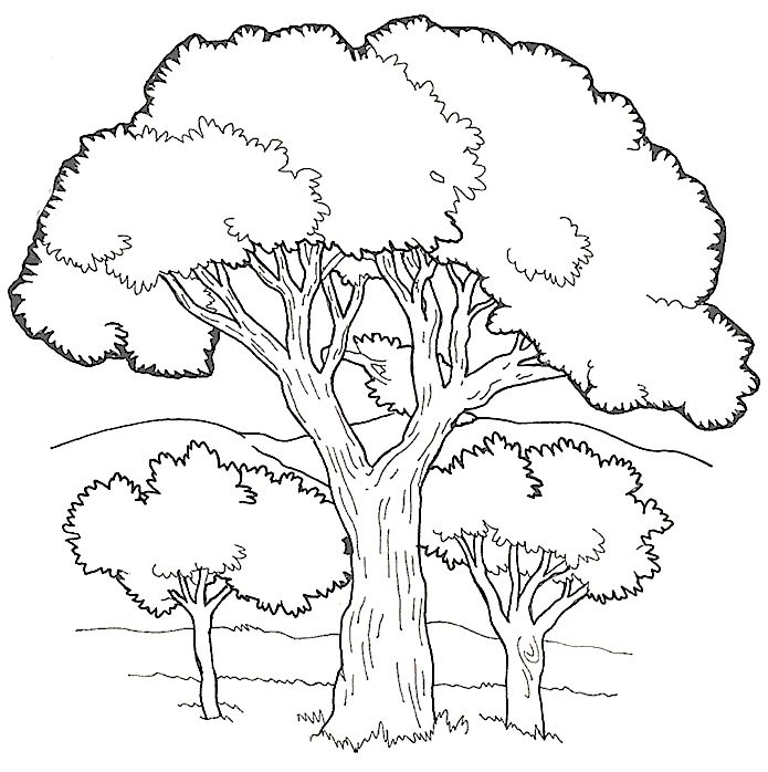 Pin by Teri Jay on Clipart Tree coloring page, Leaf