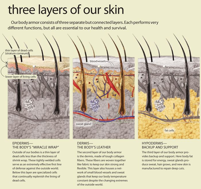 The Three Layers of Skin