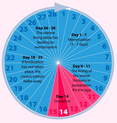 Use our Menstrual Cycle Calculator and calculate your Period, Ovulation and Due date. Find out when you stand the best chance of getting pregnant.  http://menstrual-cycle-calculator.com