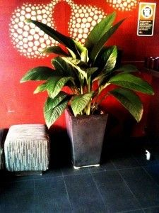 Sensational Black cabinet Planter by Paul Pph on 500px#planthire #sydney #plantrental #indoorplanthire #office planthire