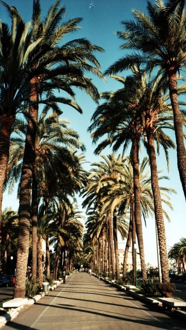 Palm trees street iphone wallpaper | Iphone wallpapers ...