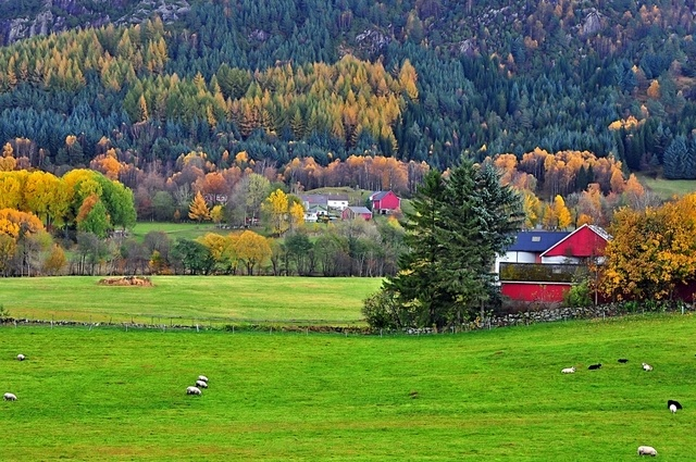 Nature in Skjoldastraumen, Norway - a photo by Torbjorn Milje