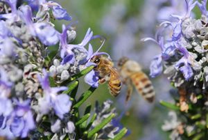 Plants for attracting beneficial insects and pollenators to the garden