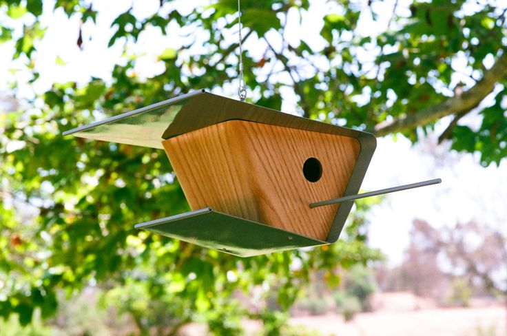 .  #modern #birds