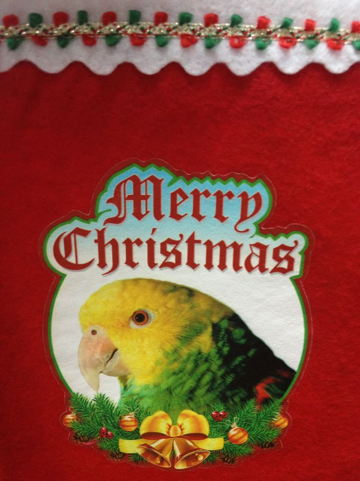 NEW Double Yellow Amazon Parrot Exotic Bird Holiday Christmas Stockings