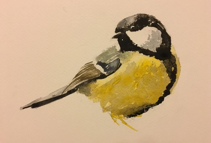 Great tit. Watercolor.