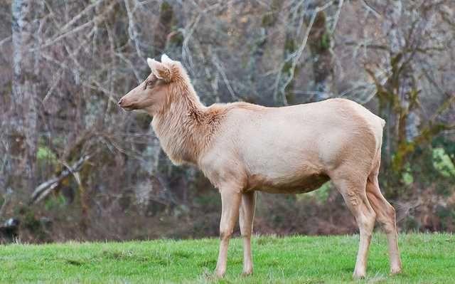 Rare Color Mutations Rare Animals Animals Animals Beautiful