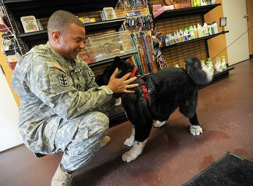 Pets may seem like a hassle in an inconsistent military lifestyle, but can actually offer multiple physical and mental health benefits