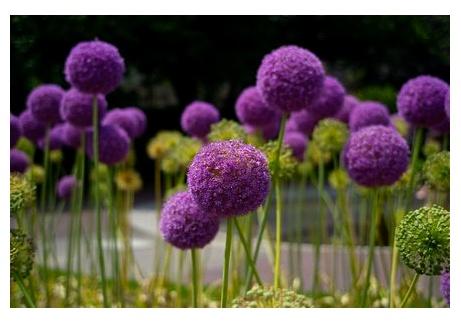 Truffula Flowers - Dr. Seuss Inspired