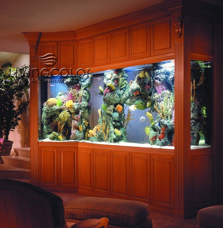 17 Best Images About Project Fish Tank On Pinterest: 17 Best Images About Awesome Saltwater Aquariums On